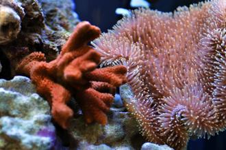 corals IAEA