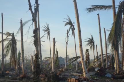 Haiyan 2