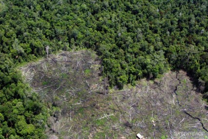 aerial documentation of Tanjumg National Park degradation