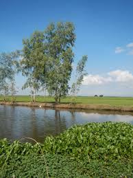 Candaba swamp. wikimedia commons