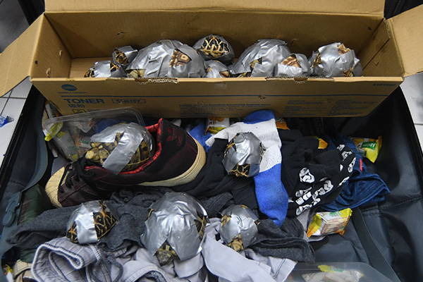 1,529 individuals were discovered wrapped in duck tape and inside containers, abandoned in luggage. Photo: Philippines Bureau of Customs