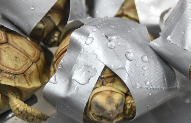 Several tortoise and freshwater turtle species seized at the Ninoy Aquino International Airport's Terminal 2 on March 3, World Wildlife Day. credit: Bureau of Customs