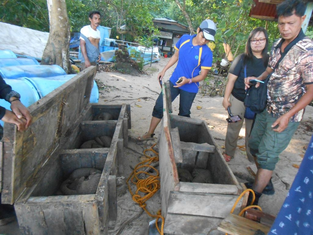 The releasing team studying the Philippine pangolins in wooden cages. by PCSD